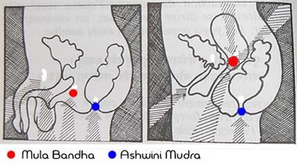 Муладхара Бандха - Муладхара Бандха